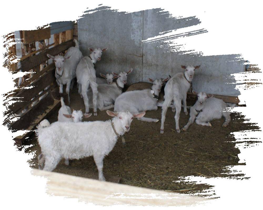 slide_0009_slidefarm01